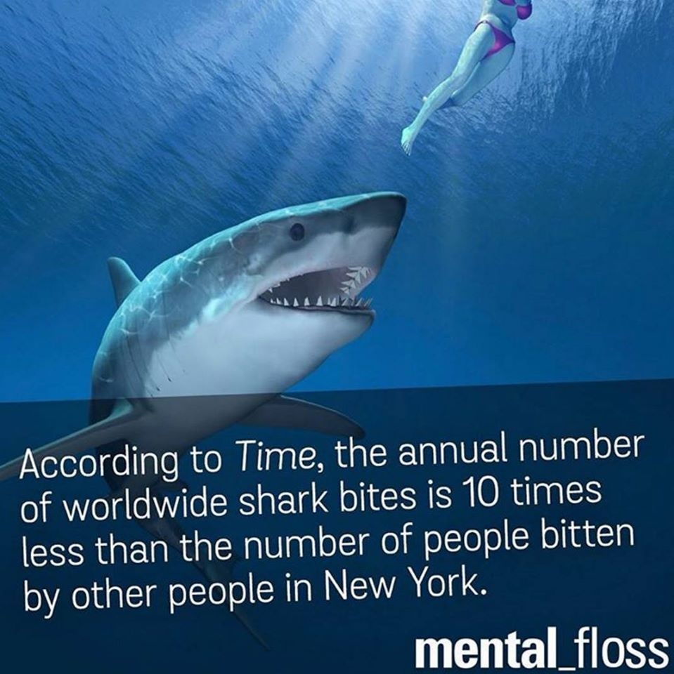according to time, the annual number of worldwide shark bites is 10 times less than the number of people bitten by other people in new york