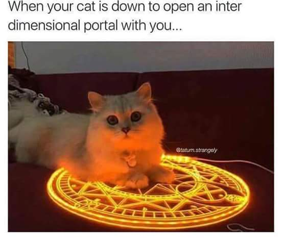 when your cat is down to open an inter dimensional portal with you