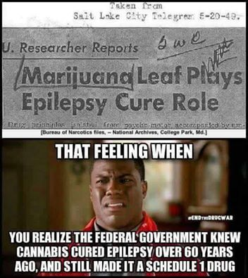 marijuana leaf plays epilepsy cure role, that feeling when you realize the federal government knew cannabis cured epilepsy over 60 years ago and still made it a schedule 1 drug