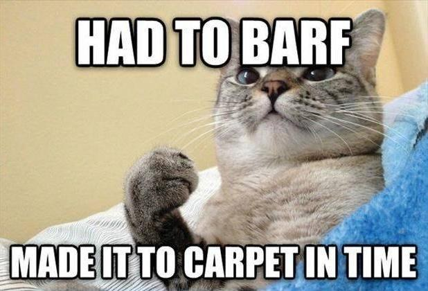 had to barf, made it to the carpet, win cat, meme