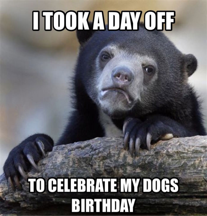 i took a day off to celebrate my dogs birthday, confession bear, meme