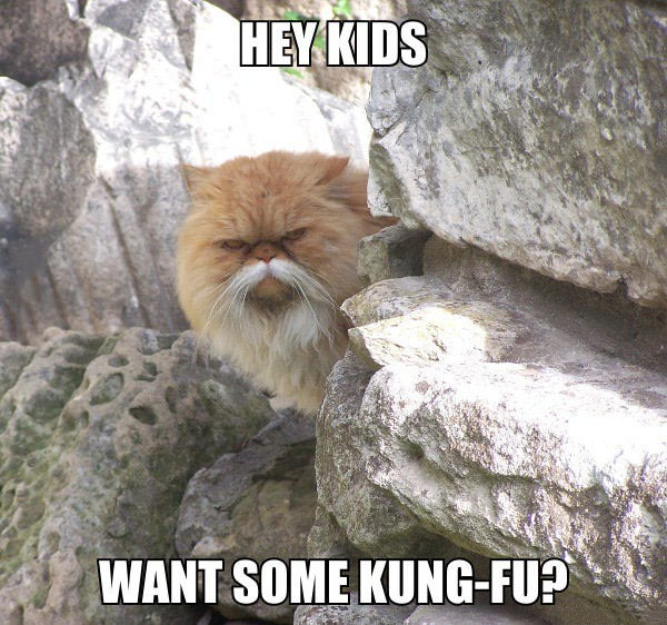 hey kids want some king fu?, meme