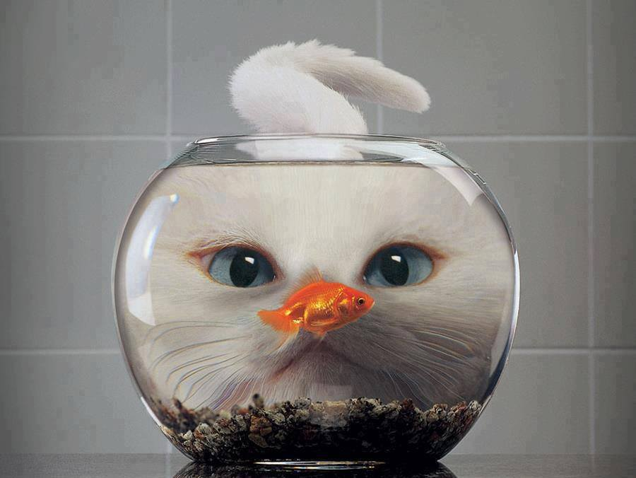 cat face distorted by fishbowl