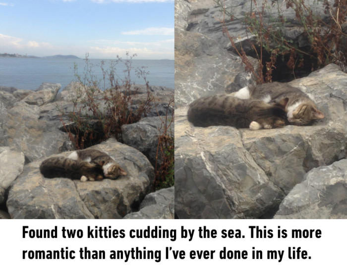 found two kitties cuddling by the sea, this is more romantic than anything I've ever done in my life