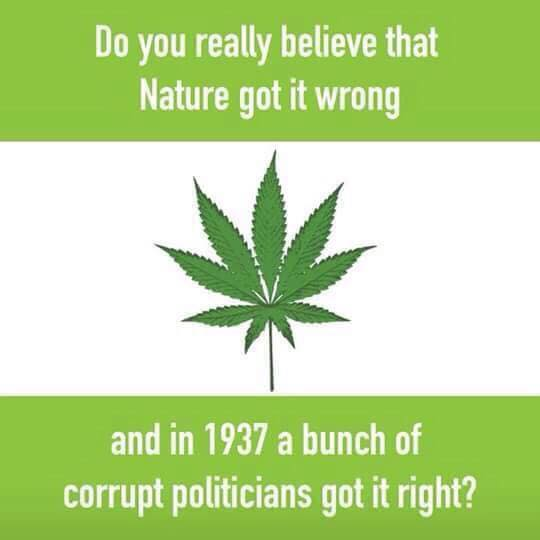 do you really believe that nature got it wrong, and in 1937 a bunch of corrupt politicians got it right?, marijuana legalization