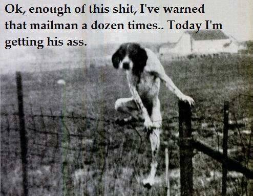 ok enough of this shit, i've warned that mailman a dozen times, today i'm getting his ass, dog climbing fence
