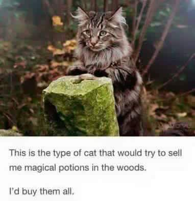 this is the type of cat that would try to sell me magical potions in the woods, i'd buy them all