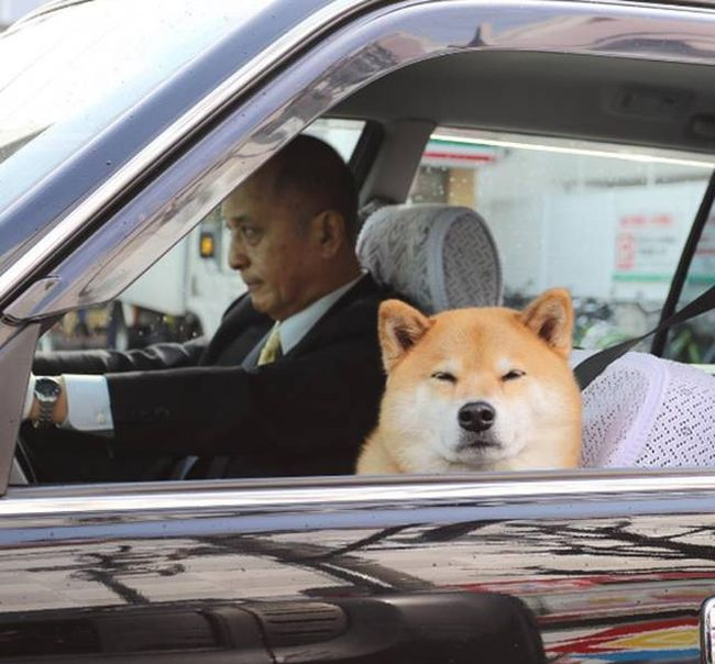 doge knows what you did, skeptical doge in car