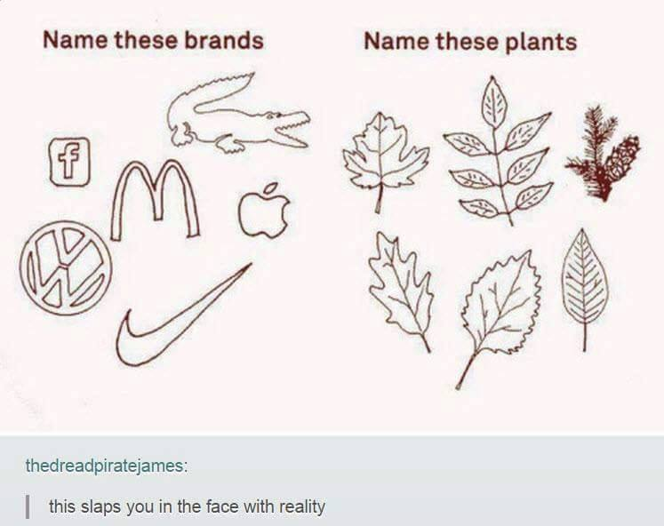 name these brands, name these plants, this slaps you in the face with reality