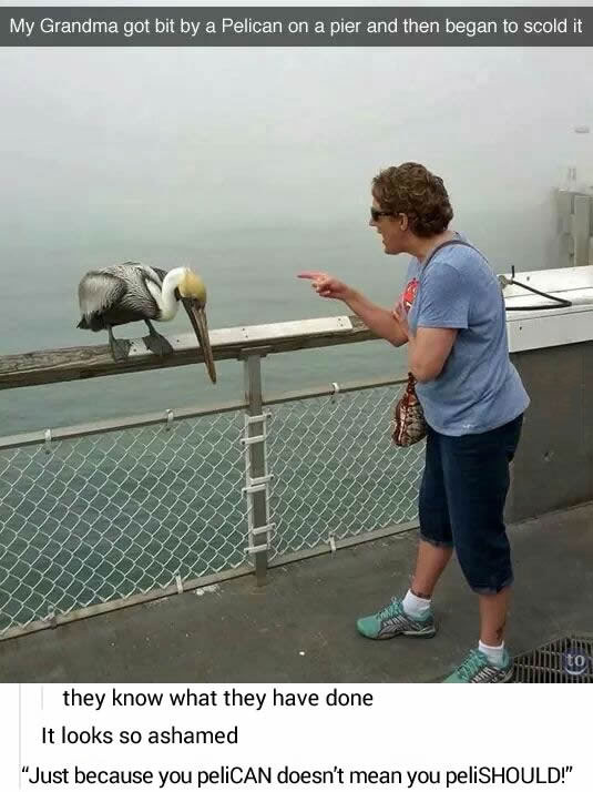 my grandma got bit by a pelican on a pier and then began to scold it, they what they have done, it looks so ashamed, just because you pelican doesn't mean you pelishould