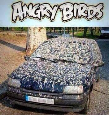 angry birds, car covered in bird shit