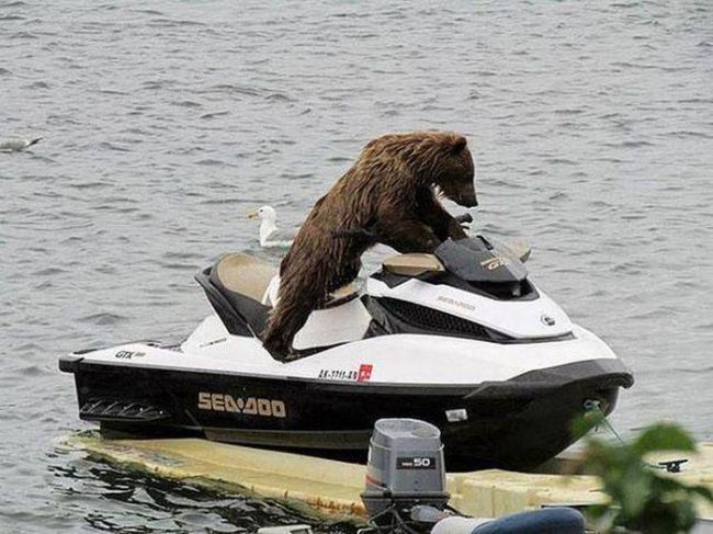 jsut a bear trying out a jetski justpost virtually entertaining
