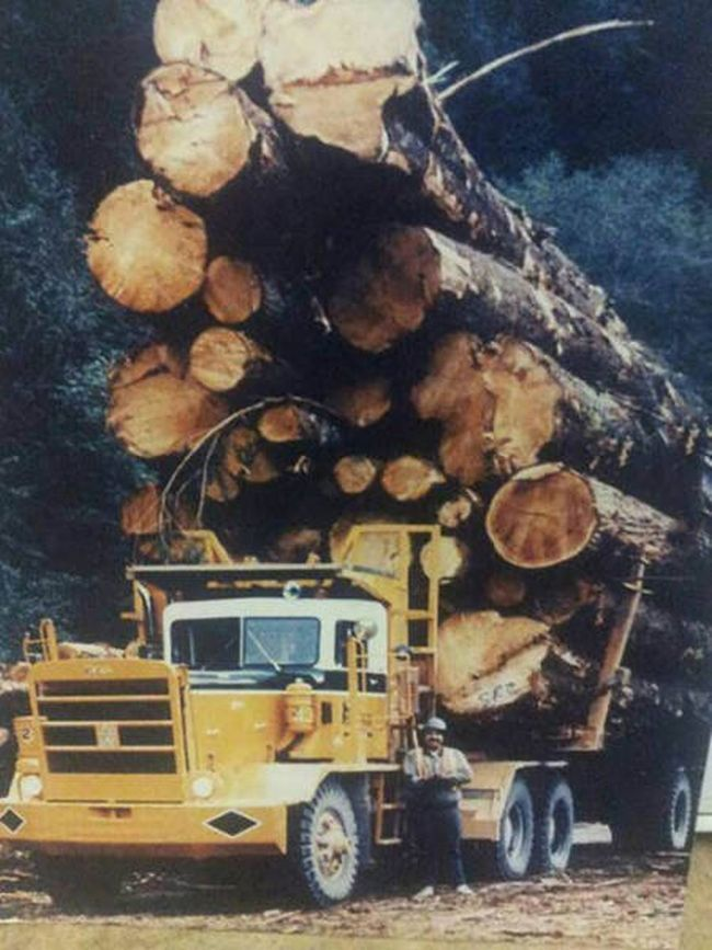 logging truck with massive logs