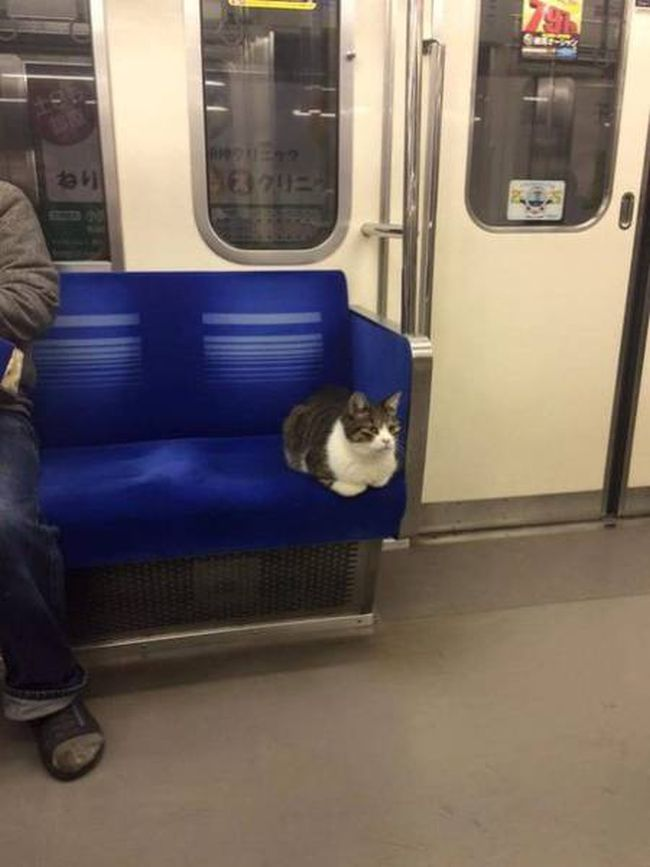 just a cat going home from work