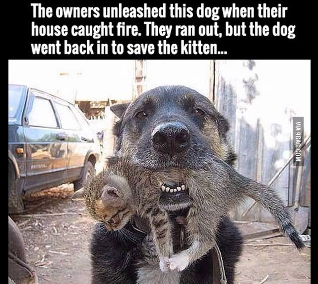 the owners unleashed this dog when their house caught fire, they ran out but the dog went back in to save the kitten