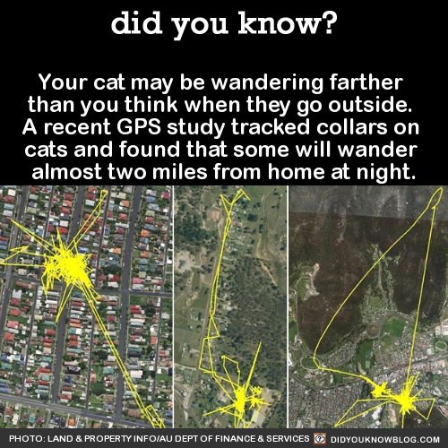 your cat may be wandering farther than you think when they go outside, a recent gps study tracked collars on cats and found that some will wander almost two miles from home at night