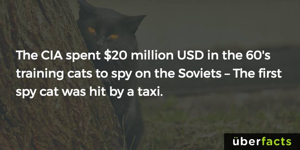 the via spent $20 million usd in the 60's training cats to spy on the soviets, the first spy cat was hit by a taxi