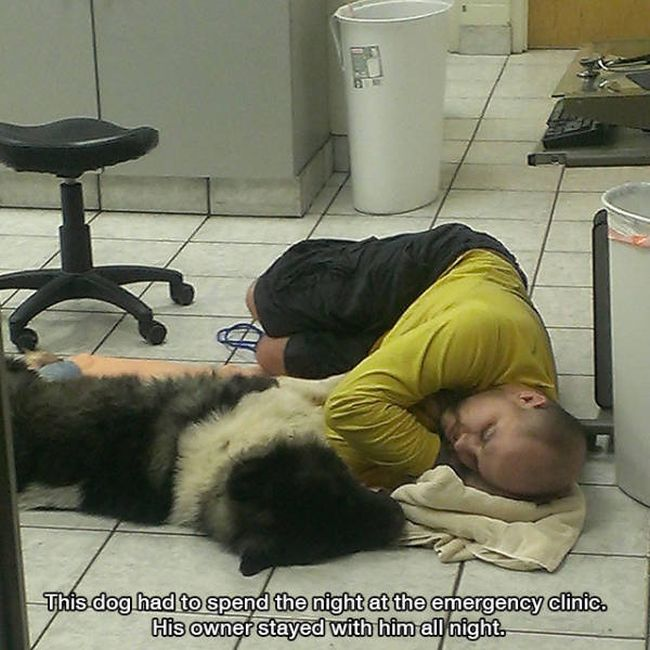 this dog has to spend the night at the emergency clinic, his owner stayed with him all night, photos to make you smile