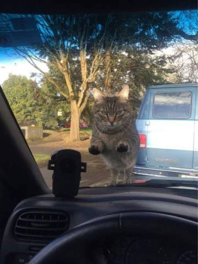 when you park in the wrong neighbourhood, angry cat on your windshield
