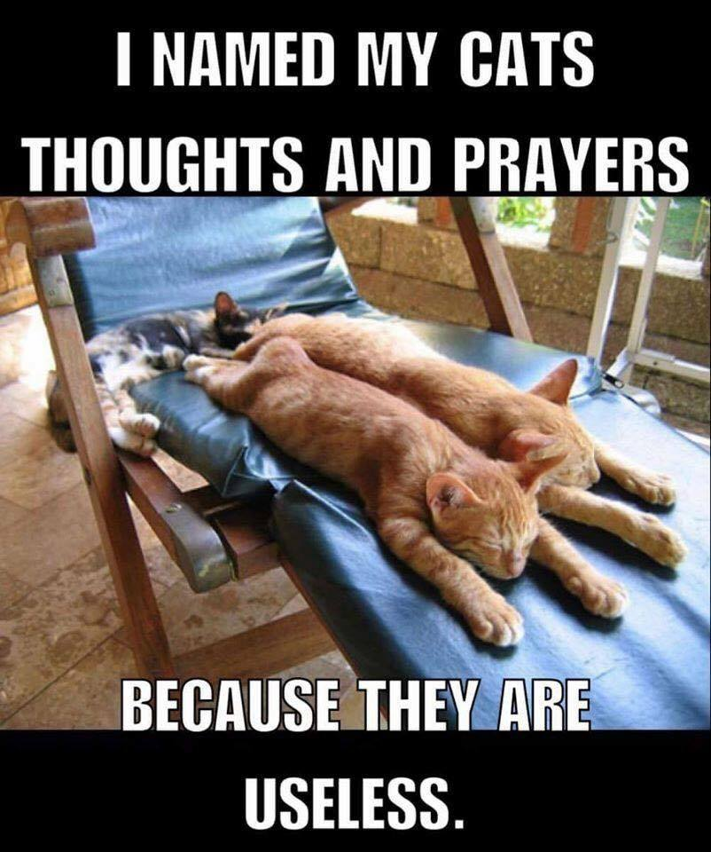 i named my cats thoughts and prayers because they are useless