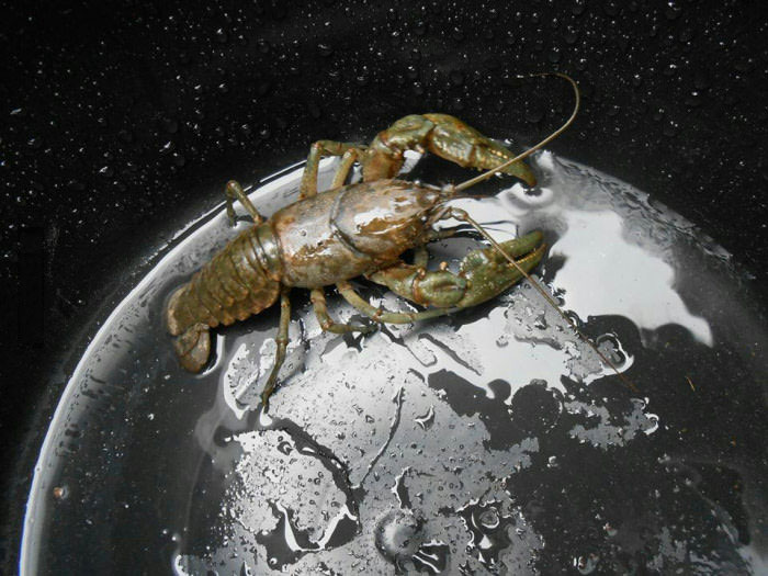 lobster in a bucket looks like a gigantic monster on a metallic planet, and the waterdrops looks like stars