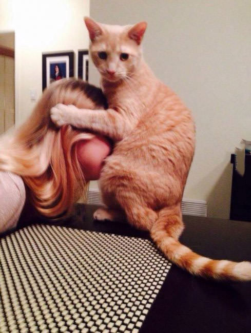 keep scrolling, cat holding blonde girls head