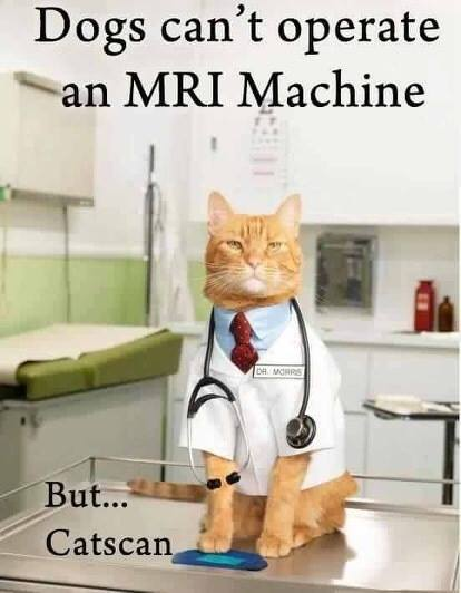 dogs can't operate an mri machine, catscan