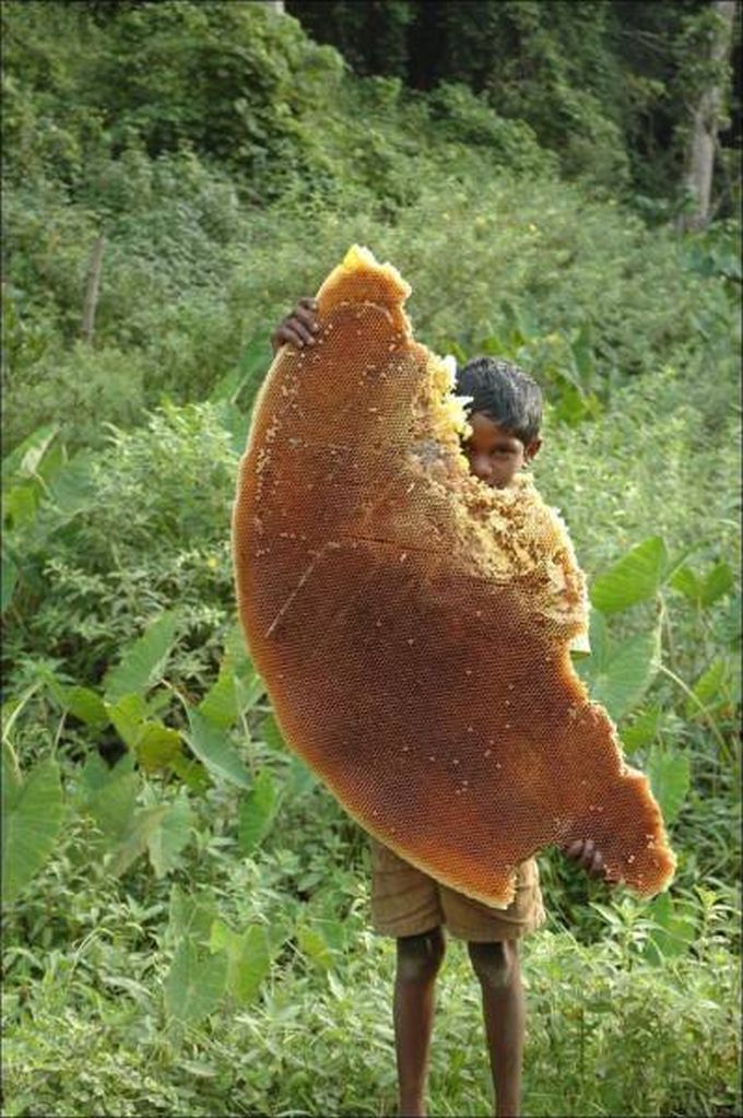 giant honey comb