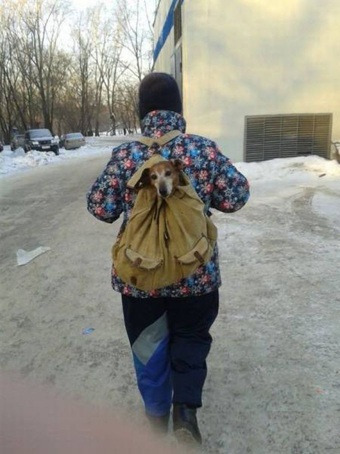 dog head sticking out of school bag