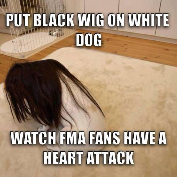 put black wig on white dog, watch fnma fans have a heart attack, meme, prank, troll