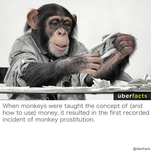 when monkeys were taught the concept of and how to use money, it resulted in the first recorded incident of monkey prostitution, uberfacts