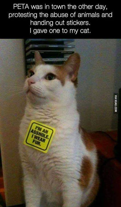 peta was in town the other day protesting the abuse of animals and handing out stickers, i have one to my cat, i'm an asshole, i wear fur
