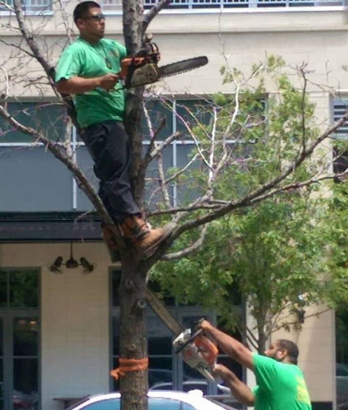 sawing the branch that you're holding onto is not the best idea, dangerous work environment