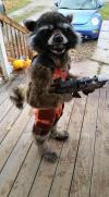 this kid dressed as rocket racoon wins the costume awards, halloween