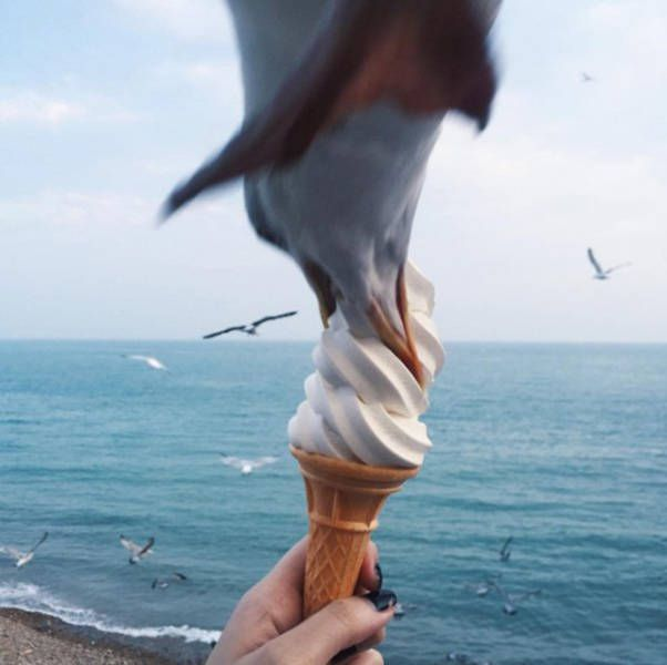 seagull stealing ice cream, timing