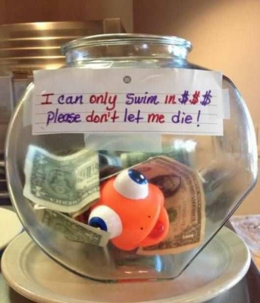 i can only swim in $$$, please don't let me die!, tip jar