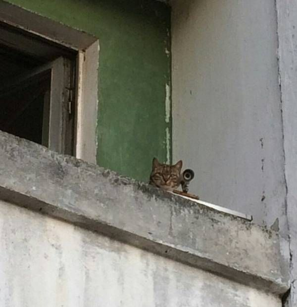 sniper cat knows exactly where you are