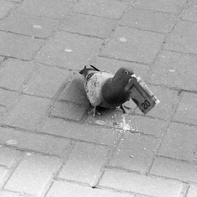 this pigeon has more money than you, 20 dollar bill in pigeon's beak