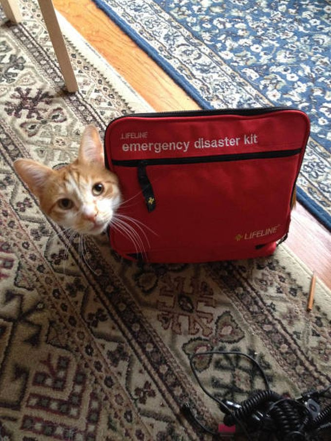 the only emergency disaster kit you'll ever need, a cat