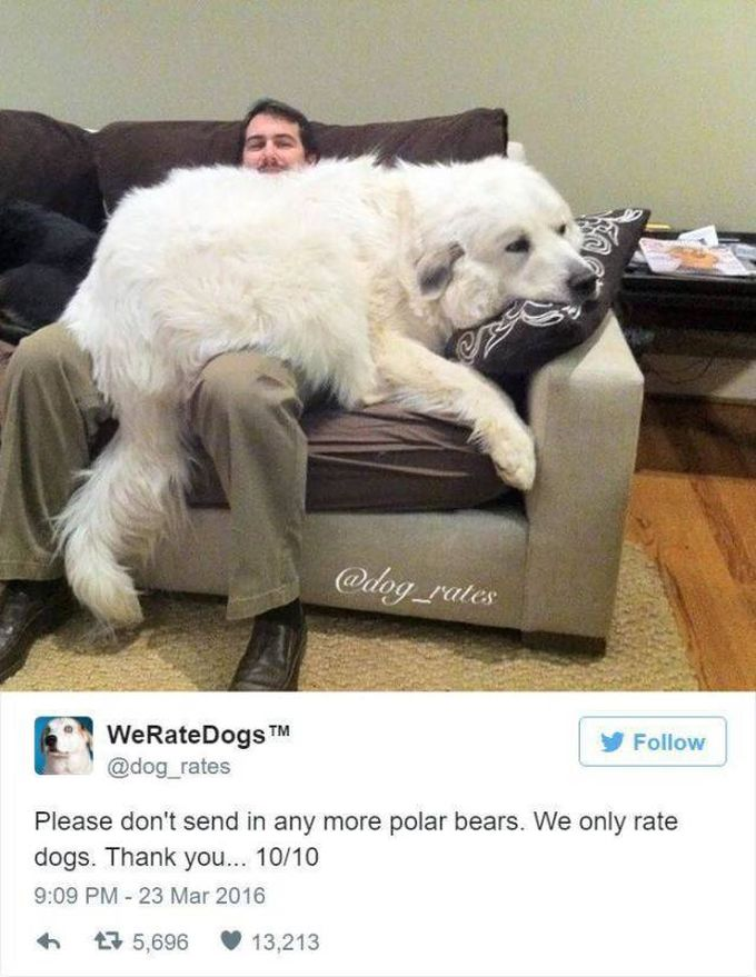 please don't send in any more polar bears, we only rate dogs, thank you, 10 10