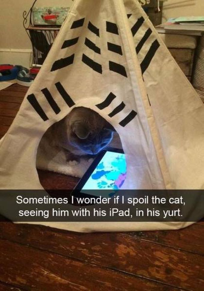 sometimes i wonder if i spoil the cat, seeing him with his ipad in his yurt