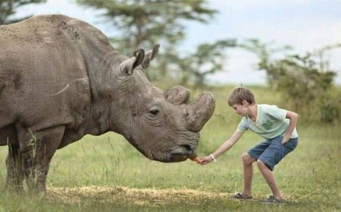 little boy feeding a rhinoceros