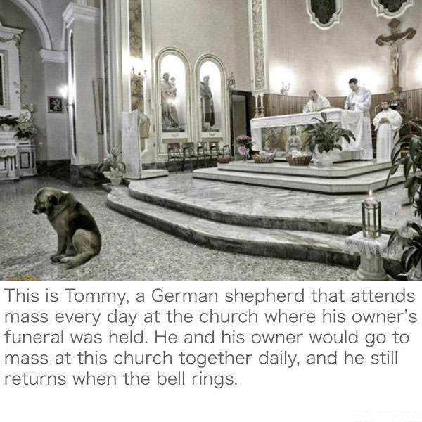 the is tommy, a german shepherd that attends mass every day at the church where his owner's funeral was held, he and his owner would go to mass at this church together daily, and he still returns when the bell rings