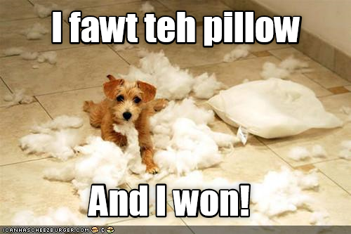 i fought the pillow and i won, puppy destroys pillow