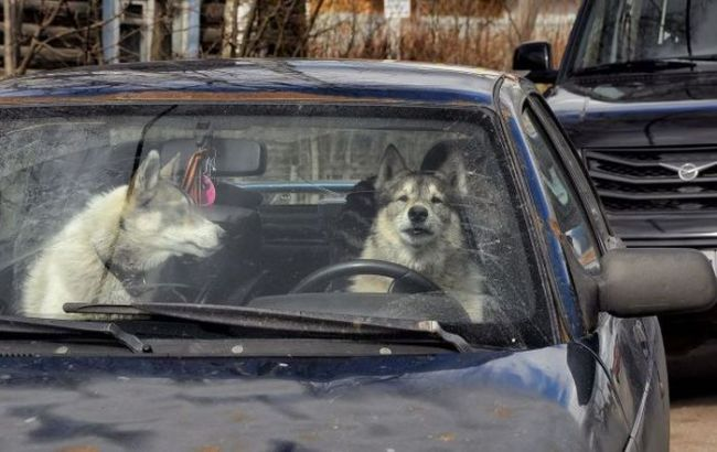 when you're stuck in traffic during a fight with the woman, two dogs in a car