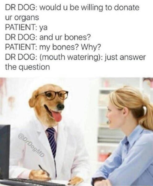 dr dog, would u be willing to donate your organs, ya, and ur bones, my bones, why?, just answer the question