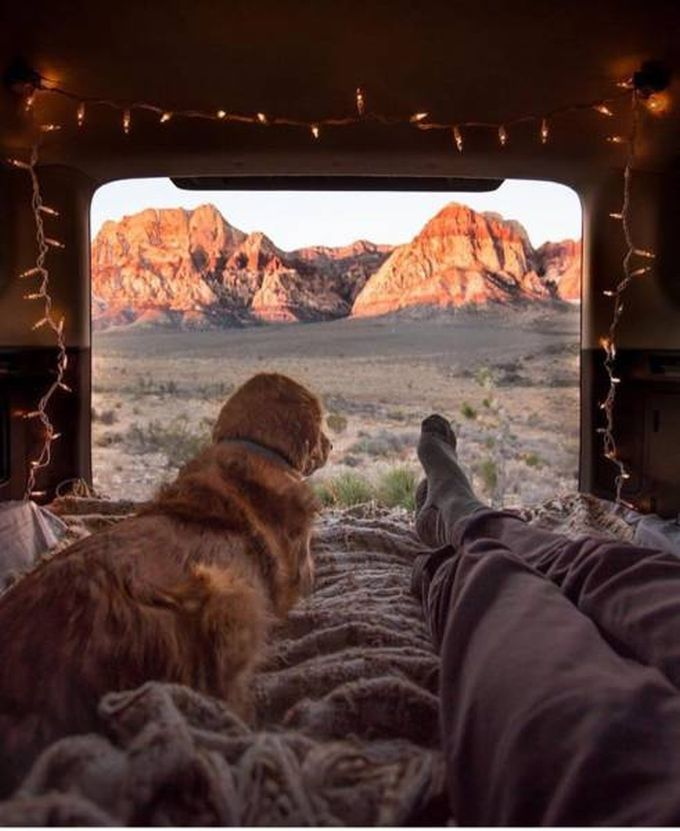 what vacation should look like, view of mountains from back of truck with dog