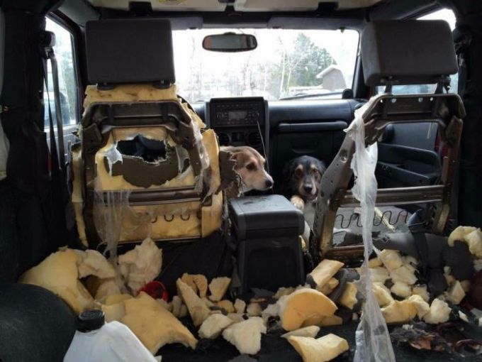 two dogs destroyed the inside of this car