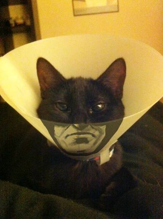 cat neck tube batman irl hack