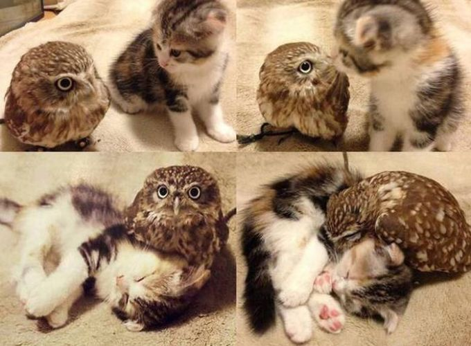 kitten and owl are friends